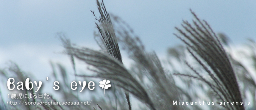 ■Babys eye Top object_Miscanthus sinensis 2.jpg